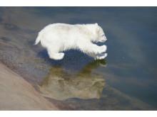 Ranua Polar Bear Cub 9