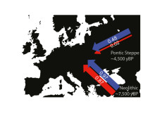 Mainly men migrated from the Pontic steppe
