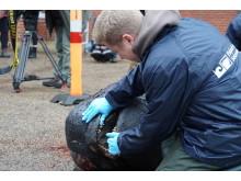 Ydre inspektion af hovedet indikerer en rask men ældre hval, med slidte tænder.
