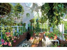 Hängande trädgårdar!