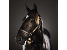 Nuncio - Årets Häst 2016