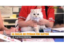 övervikt katt