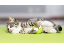 Katt med boll