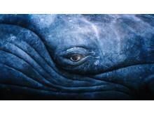 Whale_Eye_V8_seb_to_Lorenz_Eye_with_shine