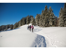 Schneeschuhwanderung, Les Paccots ©Fribourg Region