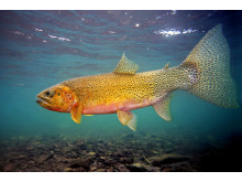 The FDA registered drug, 35% PEROX-AID®, is already used to promote fish health in the aquaculture industry.