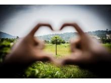 Pant blev 300 000 träd i Vi-skogen
