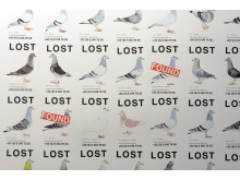 Lost Pigeons - Pilvi Takala