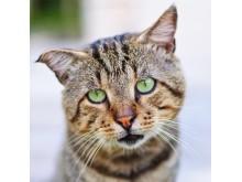 WTG-Katze-Schutz
