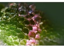 Serum Végétal Lift Plant