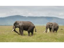 Kenya-iStock_000012605598Large
