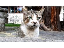 WTG-Weltkatzentag-Streunerkatze