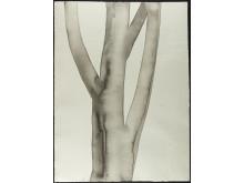 Mats Gustafson, Tree 2, 2004, akvarell på papper