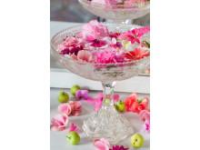 Rosa krukväxter från Mäster Grön