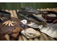 En souvenir för livet - på krokodilfarmen