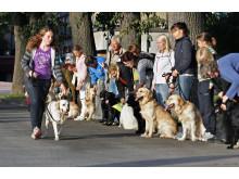 førerhund-valpetrening-