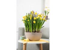 Der Frühling kann kommen mit der Pflanzschale CUBETO
