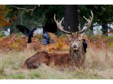 © Liam Thomson, UK, Entry, Open competition, Wildlife, 2017 Sony World Photography Awards