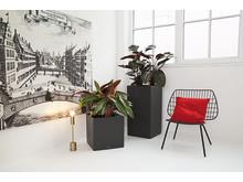 Große Zimmerpflanzen natürlich inszeniert