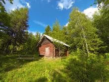 Kåho i Varaldskogen statsskog på Finnskogen i Hedmark Foto: Torkel Skoglund
