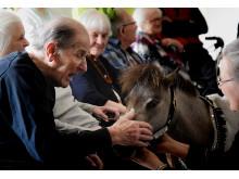 Det gavner de ældres sprog at have dyr på besøg