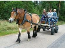 Åk häst och vagn på vår Höstdag 30 sept.
