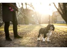 Hundpromenader tillhör de populäraste tjänsterna hos Yepstr