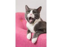 Dante_the_Cat_06
