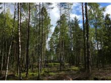 Domfälleskogen (liggande)
