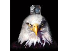 iSAW Eagle