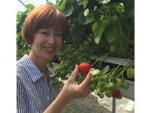Gerd med norske jordbær