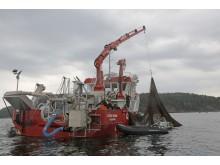 En av föreläsarna är den rutinerade musselodlaren Anders Granhed som berättar om denna marina närings svårigheter och möjligheter.
