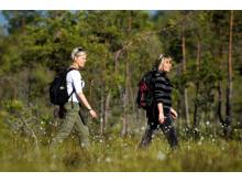 Vandring i Blåvikslandet