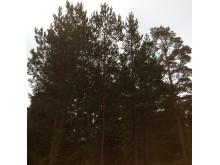 Båstad, Trøgstad