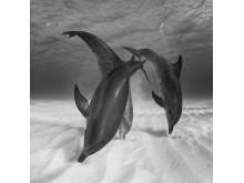 Eugene Kitsios, Hunting dolphins
