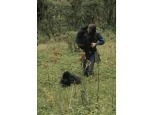 Dian Fossey - Dimhöljda hemligheter