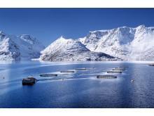 Aquaculture en Norvège