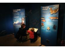 Utställningen Havet - vår skattkammare, visas på Havets Hus i Lysekil