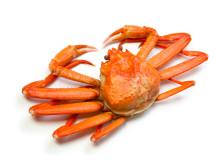 Snøkrabbe - Snow crab
