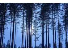 skog-och-miljo-high