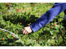 Ny lag kan hindra glesbygdens egna bärkraft
