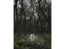LandEscapes - Ferns