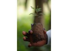 Planta i Vi-skogen