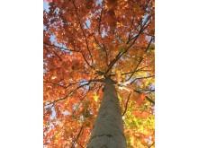 Träd IMG_8932