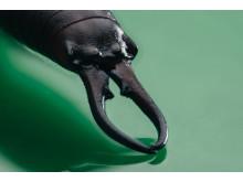 Skorek pospolity, zdjęcie zrobione aparatem Sony α7R II z obiektywem Sony Macro 90mm