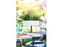 Mit BALCONISSIMA einen eigenen Kräutergarten gestalten