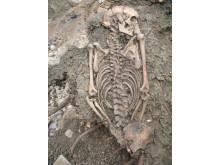 Vuxen man begravd i Sigtuna på 1000-talet. Upptäcktes 2008.