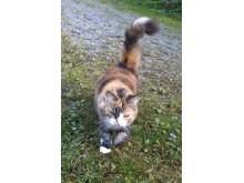 SLU får donation till forskning på kattsjukdomar