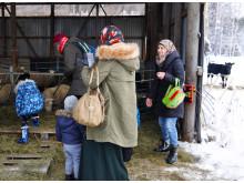 Deltagarna hälsar på bondgårdens djur.