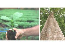 Teakinvestment von Life Forestry